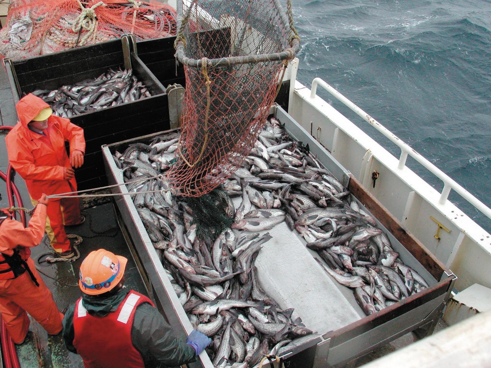 Найти компанию для рыбалки